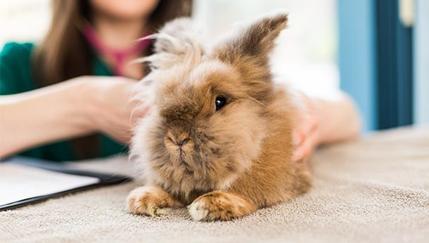 rabbitawareness