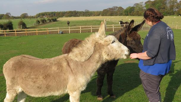 Staff with donkeys