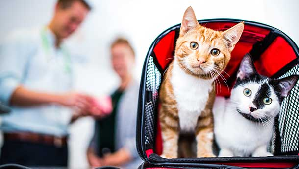 two cats in red carrier