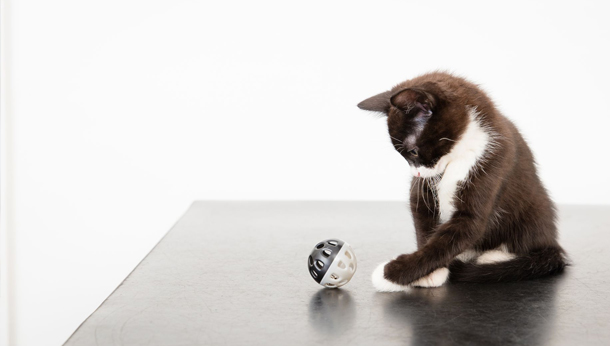 Black and white kitten playing with ball