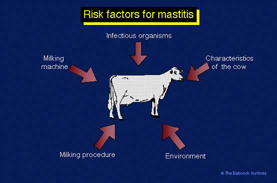 https://WEU-AZ-WEB-CDNEP.azureedge.net/mediacontainer/medialibraries/threeriversvetgroup/images/general/risk-factors-mastitis-cows.jpg
