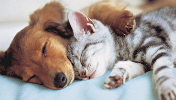 Puppy & Kitten Pack