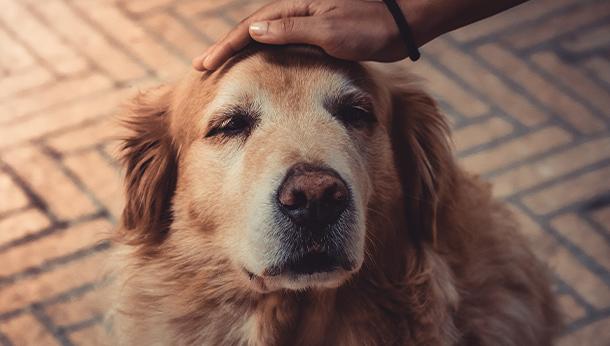 old dog 3