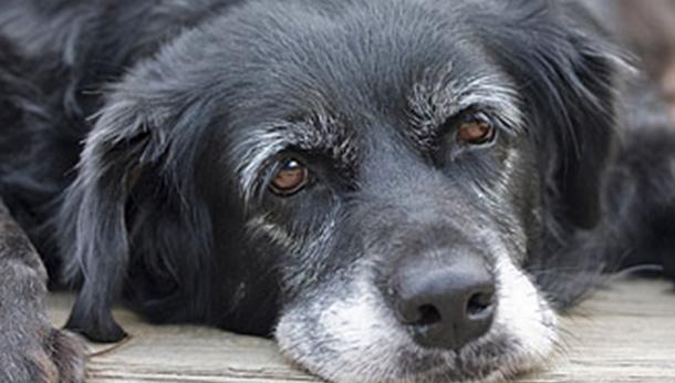old dog 4