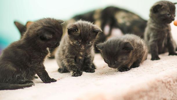 Kitten Offer