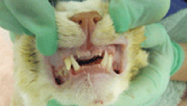 Common Dental Cases | Veterinary Dental Services - Dental Vets on quiet mouth, you have a purdy mouth, profanity mouth, smiley mouth,