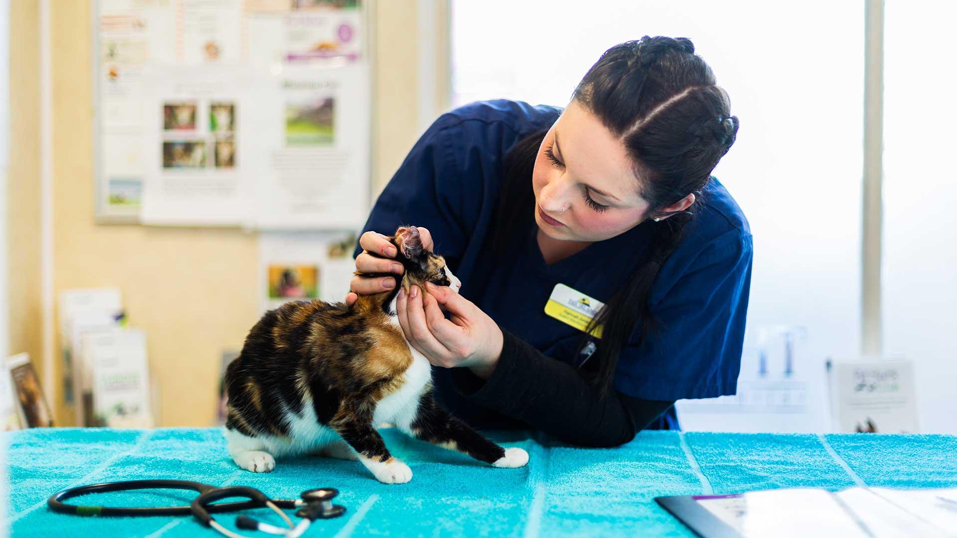 Your New Kitten Pet Advice Island Vets