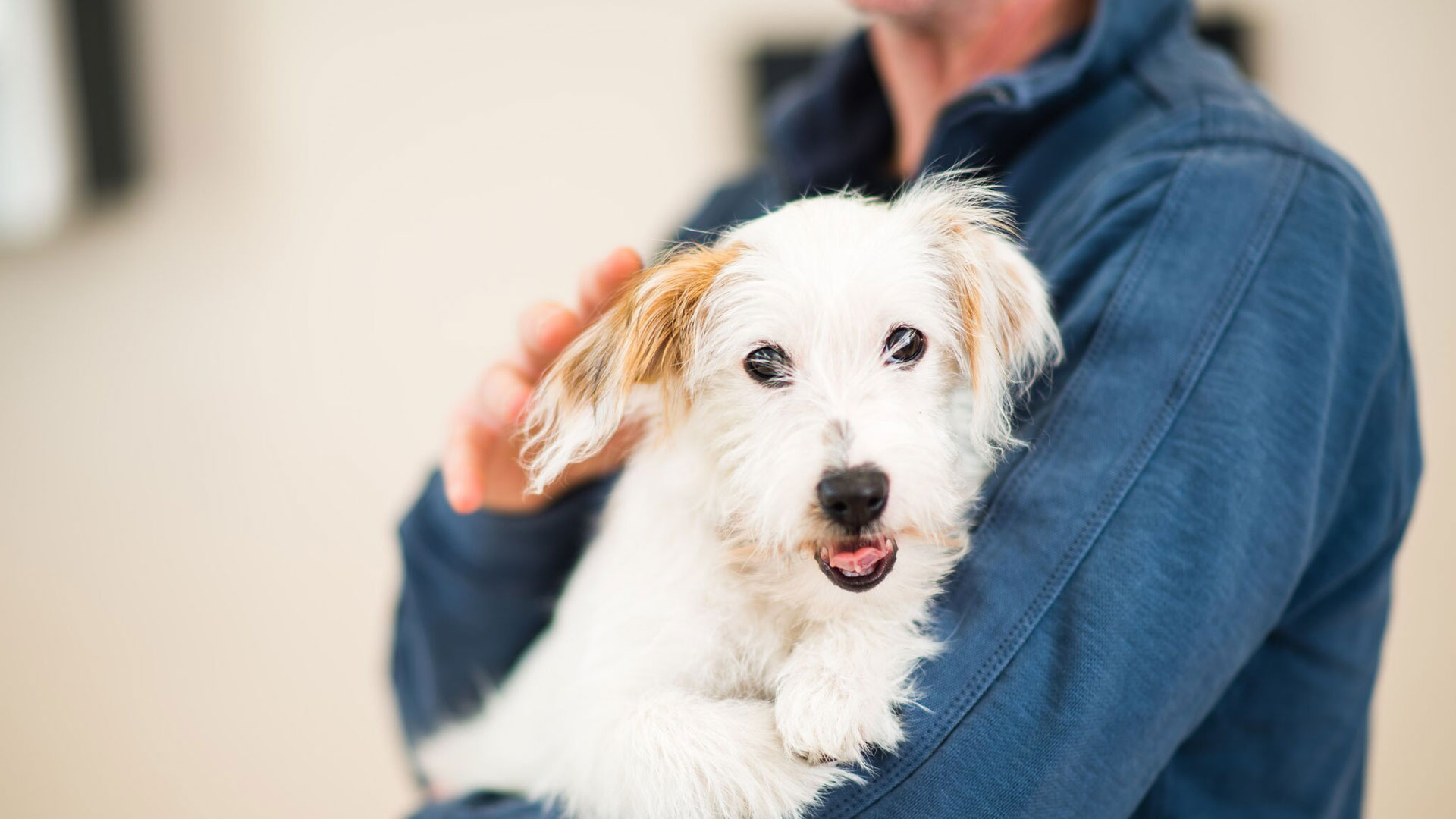 For Pet Owners Rowe Veterinary Referrals South West Vet Referrals Rowe Referrals