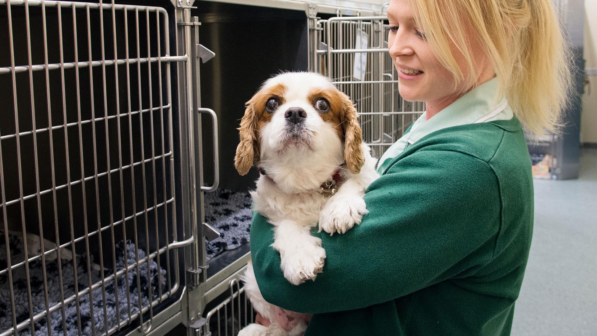 Dog Advice   Rowe Veterinary Group - Rowe Vet Group