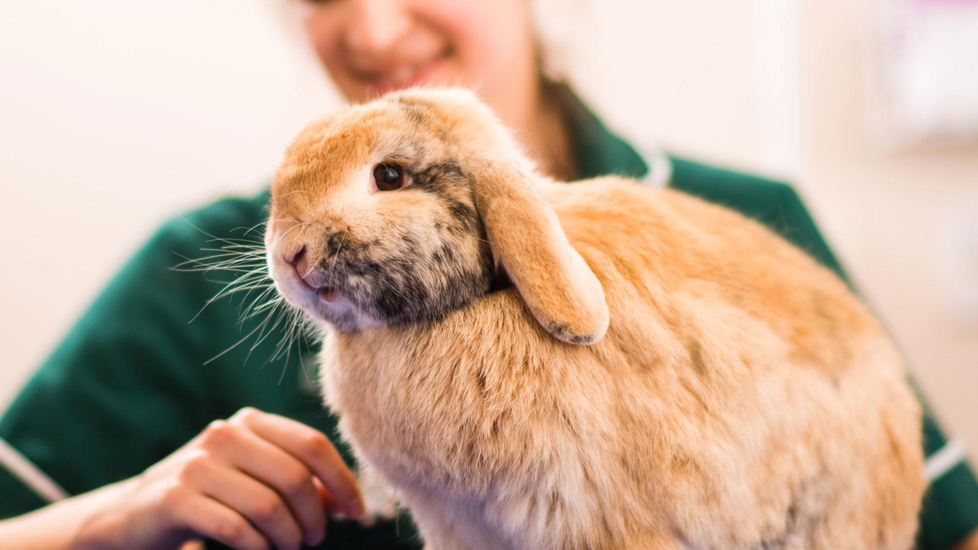 Rabbit Advice From Vets in Southampton - Unicorn Vets